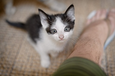 gatinhos-3