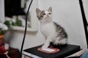 gatinhos-6