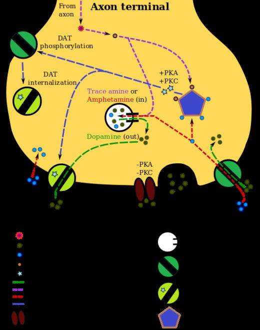 TAAR1_Dopamine.svg