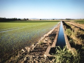 Acequia-pantone // Pantone- irrigation ditch