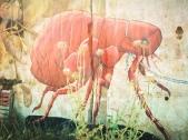 El pastor pasea la gran pulga // The shepherd strolls a big flea