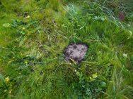 a ilha das formigas