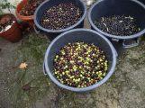45L por selha, de 35 / 32 Kg e muitas cores