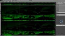 incongroup__graph_grabs__spectral_exp_2015-12-30